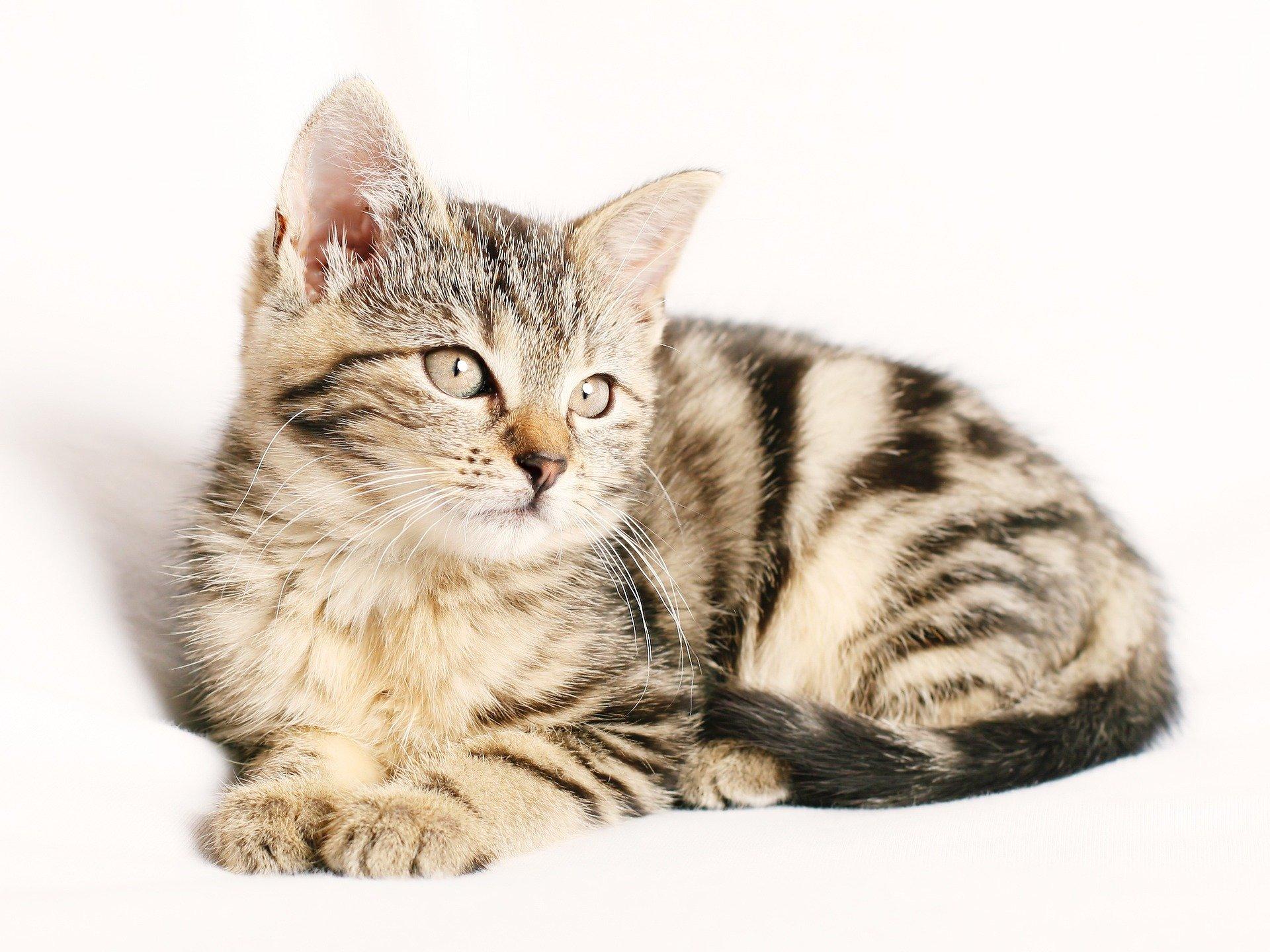 cat-1192026_1920