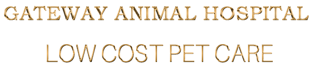 cropped-Logo-Mobile-R2-GOLD-Animals-Hospital-1.png
